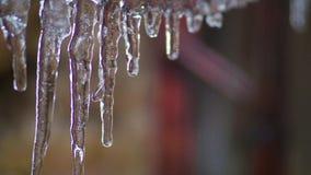 Sincelos gelados no fio Close-up Gelo de derretimento gotejamento Mola vídeos de arquivo
