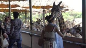 sind nicht identifizierte Familie 4K Fütterung Giraffen die am Safariweltzoo in Bangkok stock footage
