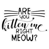 Sind Sie Kätzchen ich rechtes Miauen Stockfotografie