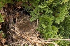 Sindrome vuota del nido Fotografia Stock