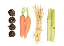 Sinense Saccharum, морковь, Вод-каштаны, ризом cogongrass Стоковые Фото