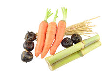 Sinense Saccharum, морковь, Вод-каштаны, ризом cogongrass Стоковое Фото