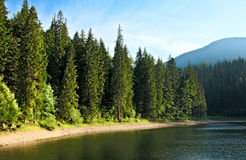 sinevir jedlinowi jeziorni tajemniczy drzewa Obrazy Royalty Free