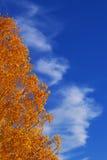 Sinfonía del otoño Imagen de archivo libre de regalías