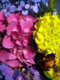 Sinfonia de brotamento das flores 1 Fotografia de Stock Royalty Free