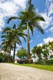 singapore солнечный Стоковые Изображения RF