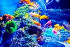 Singapore akvarium Arkivfoto