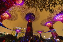 Singapore Night Skyline at Gardens by the Bay. SuperTree Grove under Blue Night Sky in Singapore. SINGAPORE - APRIL 25 2019 : Singapore Night Skyline at Gardens royalty free stock images