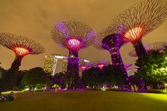 Singapore Night Skyline at Gardens by the Bay. SuperTree Grove under Blue Night Sky in Singapore. SINGAPORE - APRIL 25 2019 : Singapore Night Skyline at Gardens royalty free stock photography