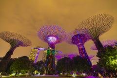 Singapore Night Skyline at Gardens b. SINGAPORE - APRIL 25 2019 : Singapore Night Skyline at Gardens by the Bay. SuperTree Grove under Blue Night Sky in stock photo