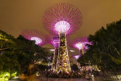 Singapore Night Skyline at Gardens by the Bay. SuperTree Grove under Blue Night Sky in Singapore. SINGAPORE - APRIL 25 2019 : Singapore Night Skyline at Gardens stock photos