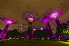 Singapore Night Skyline at Gardens by the Bay. SuperTree Grove under Blue Night Sky in Singapore. SINGAPORE - APRIL 25 2019 : Singapore Night Skyline at Gardens stock images