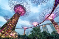Supertree Grove at Gardens by the Bay at night, Singapore Royalty Free Stock Photo