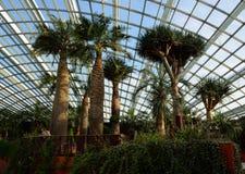 Singapore - April 28, 2014: Palmen in de Koepel van Bloemen in Tuinen door de Baai royalty-vrije stock fotografie