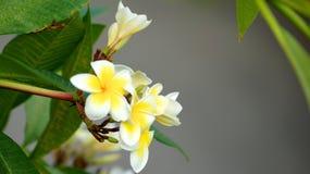 SINGAPORE - APRIL 3rd 2015: Olika blommor och växter i blommakupol på trädgårdar vid fjärden Arkivfoton