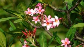 SINGAPORE - APRIL 3rd 2015: Olika blommor och växter i blommakupol på trädgårdar vid fjärden Arkivbilder