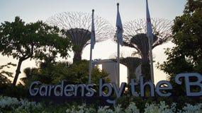 SINGAPORE - APRIL 3rd 2015: Supertreen på trädgårdar vid fjärden och det lyxiga hotellet Marina Bay Sands i bakgrunden under Arkivbilder