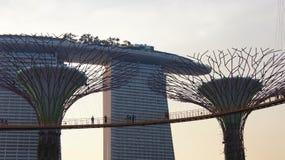 SINGAPORE - APRIL 3rd 2015: Supertreen på trädgårdar vid fjärden och det lyxiga hotellet Marina Bay Sands i bakgrunden under Royaltyfri Foto