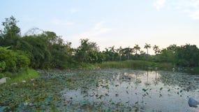 SINGAPORE - APRIL 3rd 2015: Utomhus- sikt av en härlig trädgård med en konstgjord sjö med många liljablock i vattnet Royaltyfri Foto