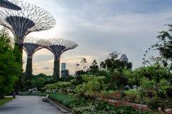 Singapore - April 28, 2014: Supertree van de Tuinen door de Baai stock foto