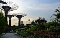 Singapore - April 28, 2014: Supertrees in Tuinen door de Baai stock fotografie
