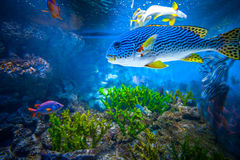 Singapore aquarium. Coral Reef and Tropical Fish in Sunlight. Singapore aquarium Stock Images