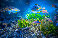 Singapore aquarium. Coral Reef and Tropical Fish in Sunlight. Singapore aquarium Royalty Free Stock Images