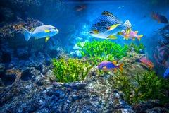 Singapore aquarium Royalty Free Stock Images