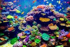 Singapore aquarium Royalty Free Stock Photo