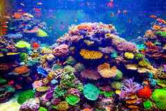 Singapore aquarium royalty free stock photography