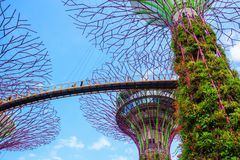 Unidentified tourist visited skyway of gardens by the bay at Sin Stock Images