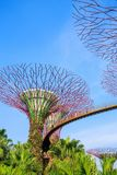 Unidentified tourist visited skyway of gardens by the bay at Sin Stock Photo