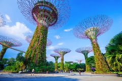 Unidentified tourist visited supertree of gardens by the bay at Stock Photo