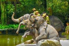 Elephants show at Singapore Zoo royalty free stock image
