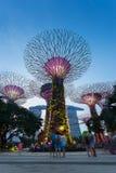 SINGAPORE - Augusti 28, 2016: Supertrees på trädgårdar vid fjärden Fotografering för Bildbyråer