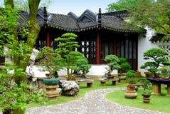 Singapore: Bonsai at the Chinese Garden Stock Photo