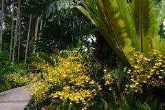 @ Singapore Botanic Garden. Visiting Singapore Botanic Garden for nth Time Royalty Free Stock Photos