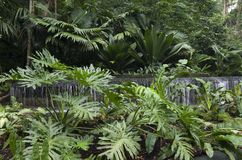 Singapore Botanic Gardens. Beautiful tropical plants and flowers in Singapore Botanic Gardens Royalty Free Stock Photo
