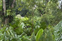 Singapore Botanic Gardens. Beautiful tropical plants and flowers in Singapore Botanic Gardens Royalty Free Stock Images