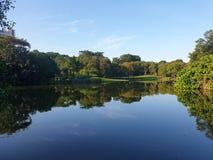 Free Singapore Botanic Gardens Eco Lake Royalty Free Stock Images - 196966799