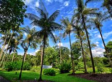 Singapore Botanic Gardens, Marina Bay, Singapore Royalty Free Stock Images