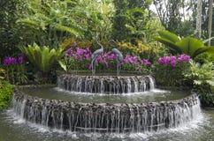 Singapore Botanic Gardens. Orchid garden in Singapore Botanic Gardens royalty free stock photography