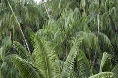 Singapore Botanic Gardens Stock Photography