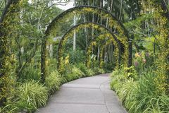 Singapore Botanic Gardens path Stock Photography