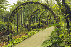 Singapore Botanical Garden Stock Image