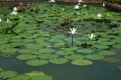 Singapore botanical garden Stock Photo