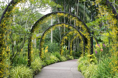 Singapore Botanical Garden. Scenic artificial arcs with many yellow orchid flowers in famous Singapore Botanical Garden Stock Images