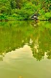 Singapore botanisk trädgårdsvan sjö Arkivbild