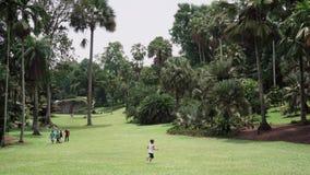 Singapore botaniska trädgårdar stock video