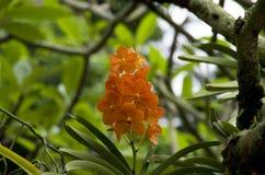 Singapore botaniska trädgårdar Arkivfoto